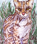 "Ocelot, ATC, 2.5"" x 3.5"", wc & ink"