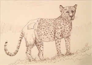 leopardsshorts